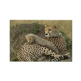 CHEETAH FAMILY IN THE MARA Rectangle Magnet