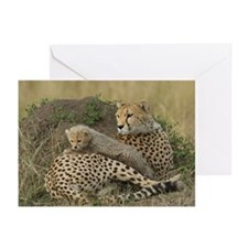 CHEETAH FAMILY IN THE MARA Greeting Cards (Pk of 2