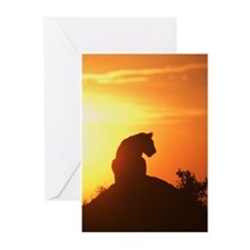 LION AT DAWN Greeting Cards (Pk of 20)