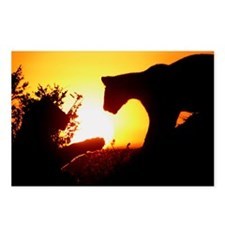 LIONS PLAY AT DAWN Postcards (Package of 8)