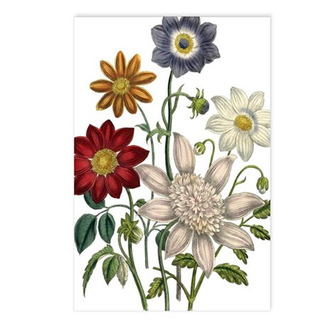 Dahlias Postcards (Package of 8)