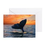 WHALE DREAMS Greeting Cards (Pk of 20)