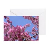 Apple Blossom Cards (Pk of 20)