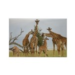 Giraffe Herd Products Rectangle Magnet (100 pack)