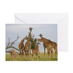 Giraffe Herd Products Greeting Cards (Pk of 20)