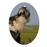 Osprey portrait Oval Ornament