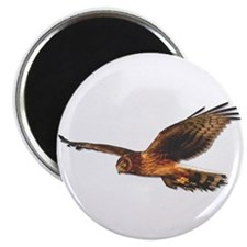 Northern Harrier Magnet