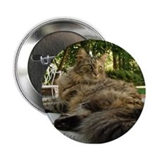 "Maine Coon cat bushy tail 2.25"" Button"