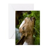 Boer Goat Blank Greeting Card