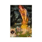 Fairies / Pekingese(r&w) Rectangle Magnet