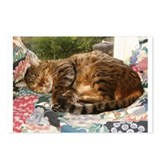 Benny sleeping Postcards (Package of 8)