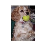 Mocha Have a Ball! Rectangle Magnet (10 pack)