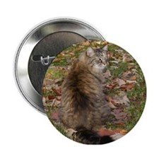 "Maine Coon cat Fall leaves 2.25"" Button"