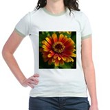 Yellow Red Zinnia T