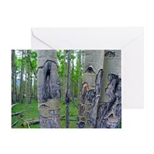 Aspen Grove: Round Mountain Greeting Card