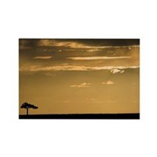 ACACIA TREE IN THE MARA Rectangle Magnet