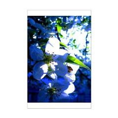 Apple Blossom Blues Posters