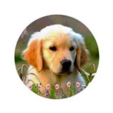 "Austin, Retriever Puppy 3.5"" Button (100 pack)"