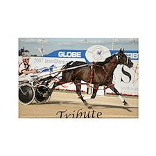 Funny Standardbred horse Rectangle Magnet (10 pack)