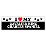 CAVALIER KING CHARLES SPANIEL Bumper Bumper Sticker