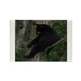 black bear in tree Rectangle Magnet (10 pack)