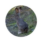 Black Tailed Jackrabbit 3.5
