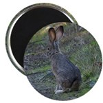 Black Tailed Jackrabbit Magnet
