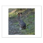 Black Tailed Jackrabbit Small Poster