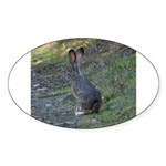 Black Tailed Jackrabbit Oval Sticker