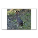 Black Tailed Jackrabbit Rectangle Sticker