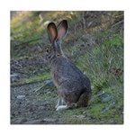 Black Tailed Jackrabbit Tile Coaster