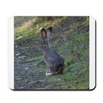 Black Tailed Jackrabbit Mousepad