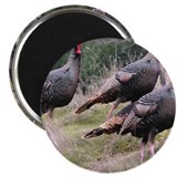 "Three Tom Turkey Gobblers 2.25"" Magnet (10 pack)"