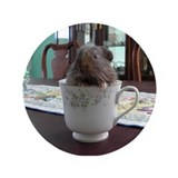 "3.5"" Button Teacup Guinea Pig"