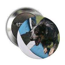 "Cattle Dog Agility Artwork 2.25"" Button"