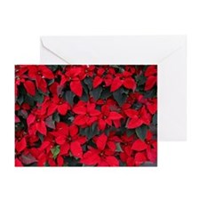 Red Poinsettias Greeting Cards (Pk of 10)
