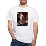 Accolade / Sheltie tri White T-Shirt