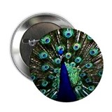 Peacock 2.25&quot; Button (10 pack)