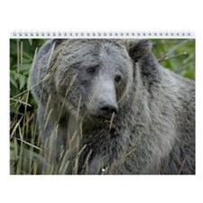 Bears Wall Calendar