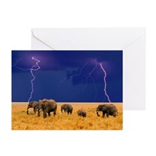 Cute Elephant Greeting Cards (Pk of 10)