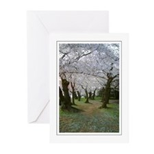 Cherry Blossom Path Greeting Cards (Pk of 10)