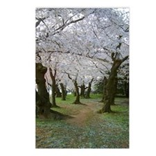 Cherry Blossom Path Postcards (Package of 8)
