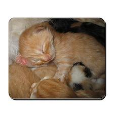 Newborn Kitten Sleeping Mousepad