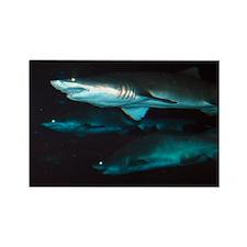 Sharks Rectangle Magnet (100 pack)