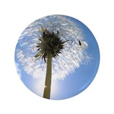 "Dandelion 3.5"" Button (100 pack)"