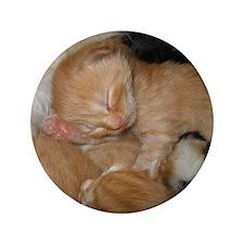 "Newborn Kitten Sleeping 3.5"" Button"