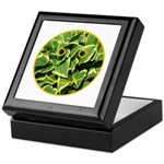 Hosta Smiley Face Keepsake Box
