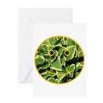 Hosta Smiley Face Greeting Card