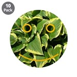 Hosta Smiley Face 3.5
