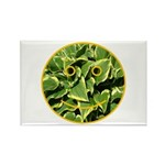 Hosta Smiley Face Rectangle Magnet